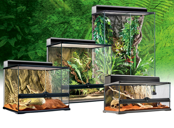 exo terra medium terrarium evolution reptiles. Black Bedroom Furniture Sets. Home Design Ideas