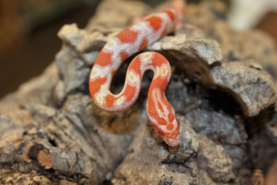 hewan peliharaan di kost - ular