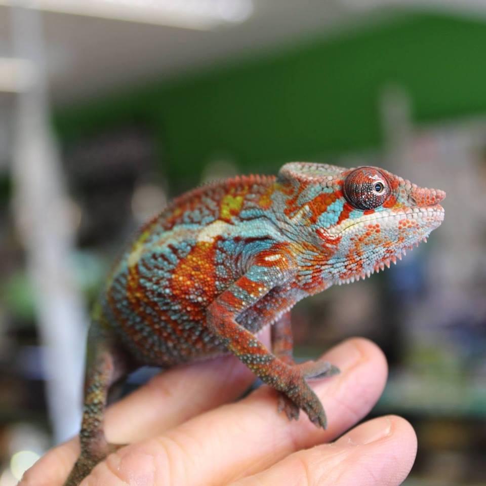 Chameleon Glass Uk