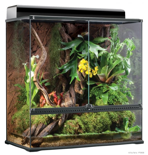 chameleon terrarium set up evolution reptiles. Black Bedroom Furniture Sets. Home Design Ideas