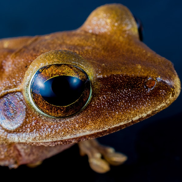 amphibian-animal-animal-photography-59828