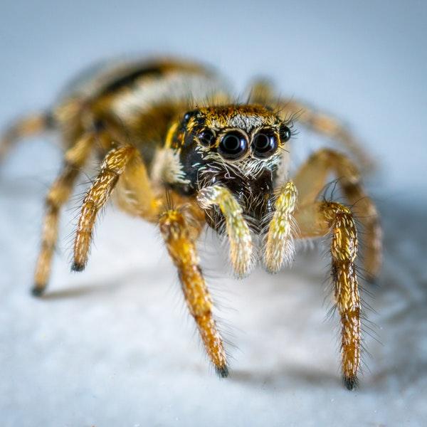 animal-arachnid-close-up-1104949