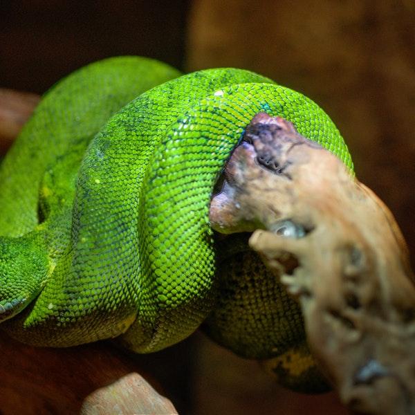 animal-green-long-9199