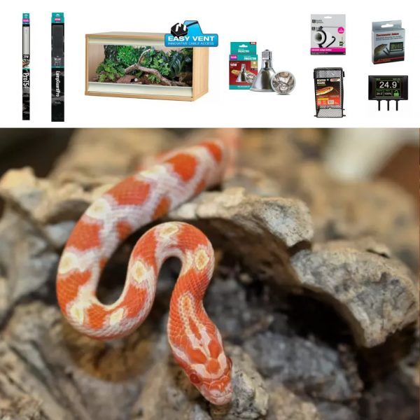 a corn snake, snake vivarium, and accessories or supplies for a corn snake vivarium setup
