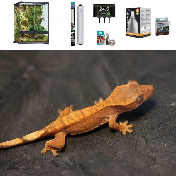 Crested Gecko Terrarium 60cm