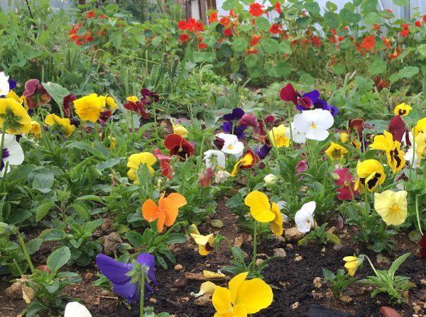 Flowers-e1561471025587-6.jpg
