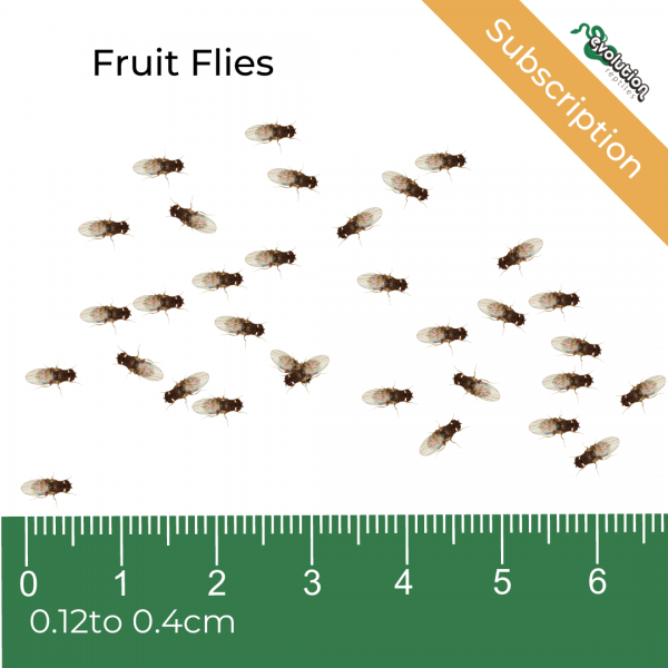 Fruit Flies Subscription