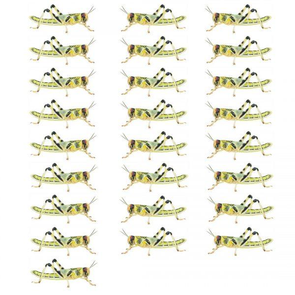 Locust 25