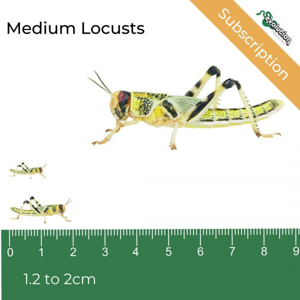Medium Locust Subscription + ruler2