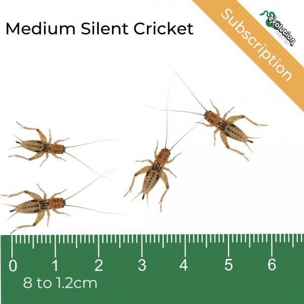 Medium Silent Subscription + ruler