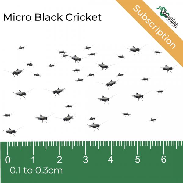 Micro Black Crickets Subscription (1)