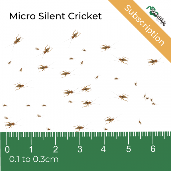 Micro Silent Subscription + ruler