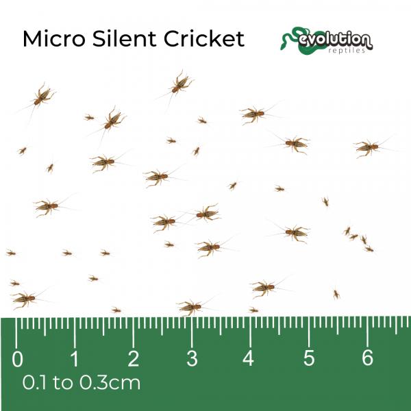 Micro Silent + ruler