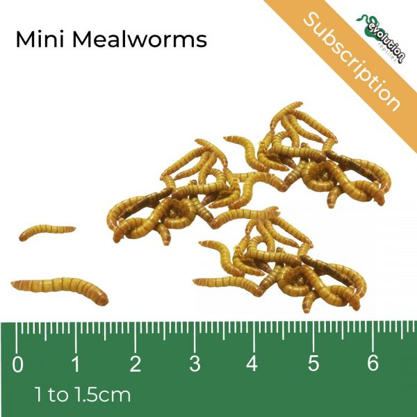 _Mini Mealworm Subscription + ruler