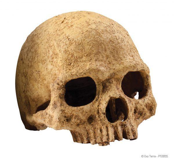 PT2855_Primate_Skull-e1461506792360-6.jpg