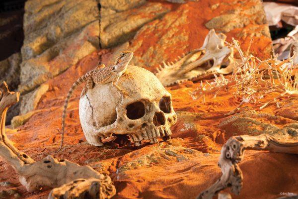 PT2855_Primate_Skull_Desert-e1461506806565-6.jpg