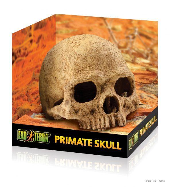 PT2855_Primate_Skull_Packaging-e1461506778667-6.jpg