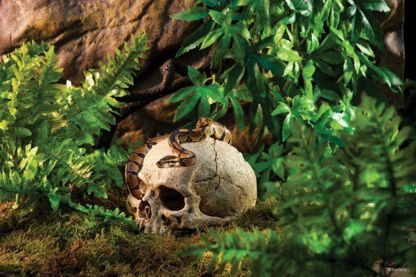PT2855_Primate_Skull_Tropical-e1461506828268-6.jpg