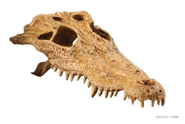 PT2856_Crocodile_Skull-4-e1461507306933-6.jpg