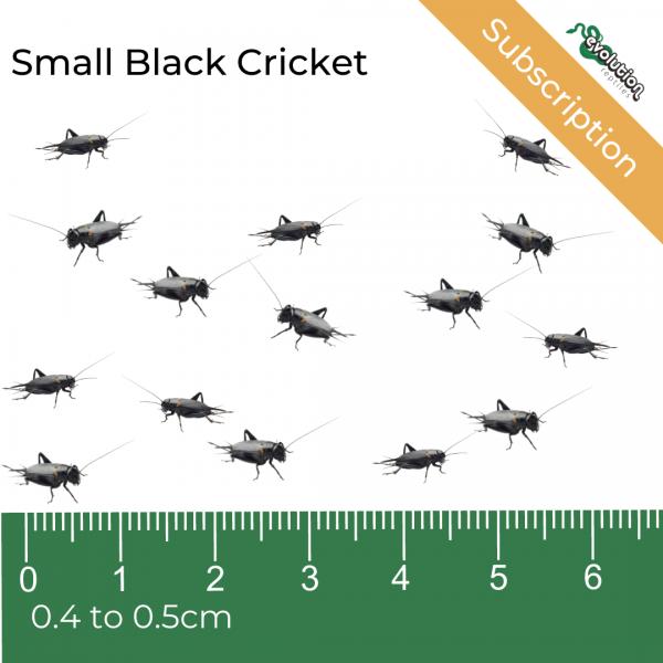 Small Black Crickets Subscription