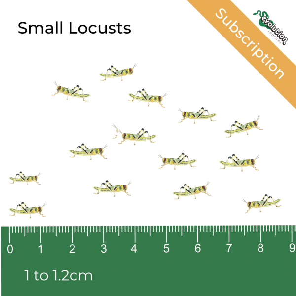Small Locust Subscription