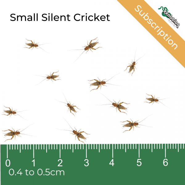 Small Silent Subscription + ruler