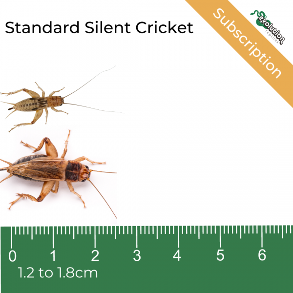 Standard Silent Subscription + ruler