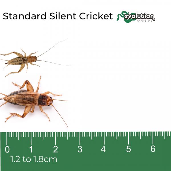 Standard Silent + ruler