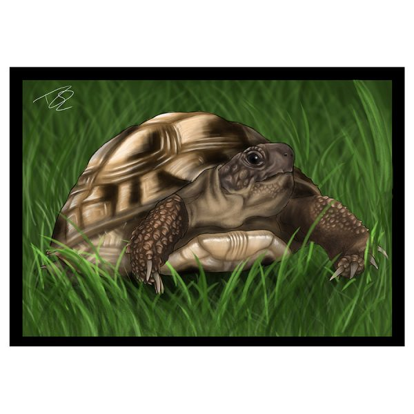 Tortoise-Greetings-Card-15.jpg