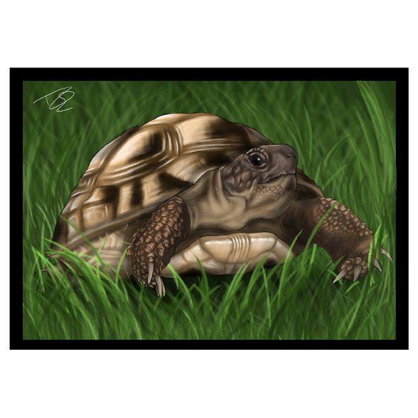 Tortoise-Greetings-Card-15.jpg