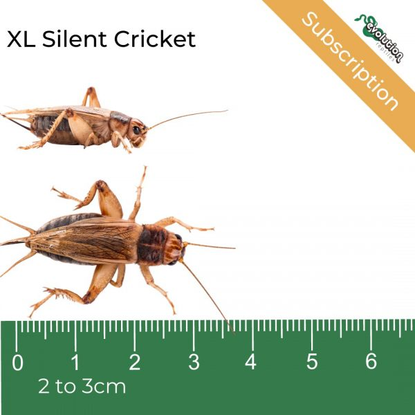 _XL Silent Subscription + ruler