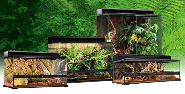 natural_terrarium_large_set-6.jpg