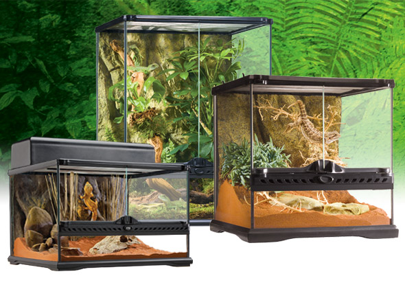 natural_terrarium_small_set-6.jpg