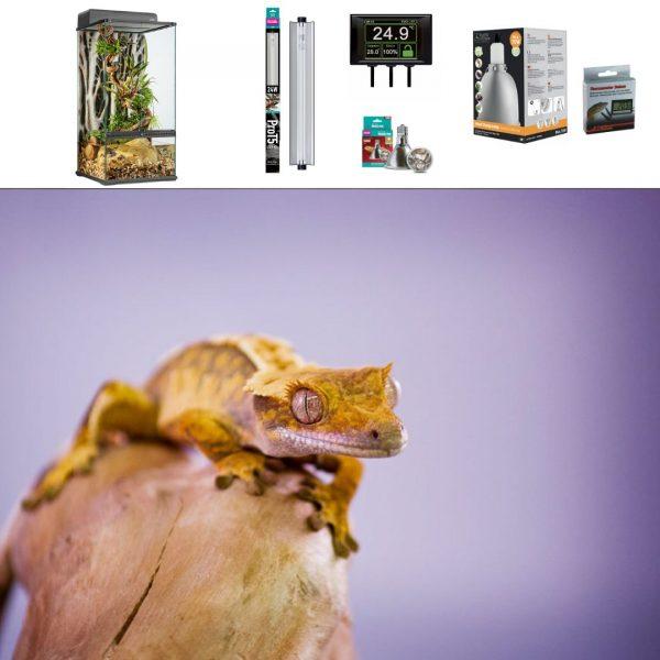 Crested Gecko Paludarium Set up x45x45x90cm