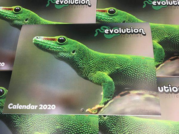 Evolution Reptiles Calendar 2020