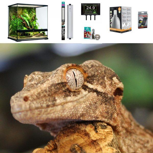 Gargoyle Gecko Terrarium 60x45x60