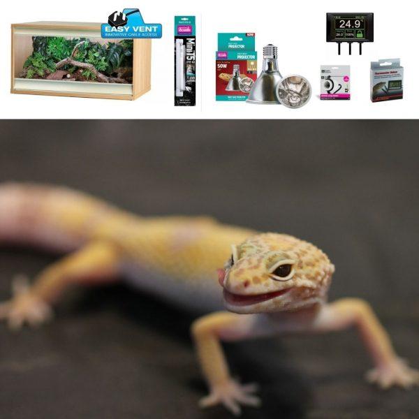 Leopard Gecko Set up – wooden vivarium
