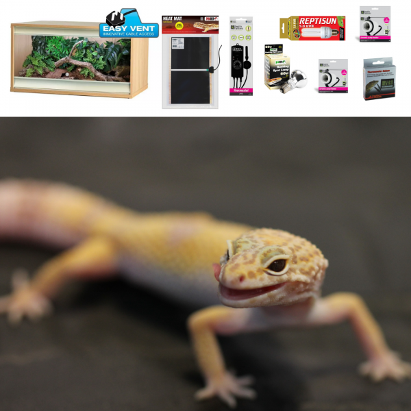 Leopard Gecko Set up – wooden vivarium