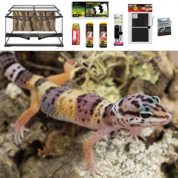 Leopard Gecko Terrarium 60cm