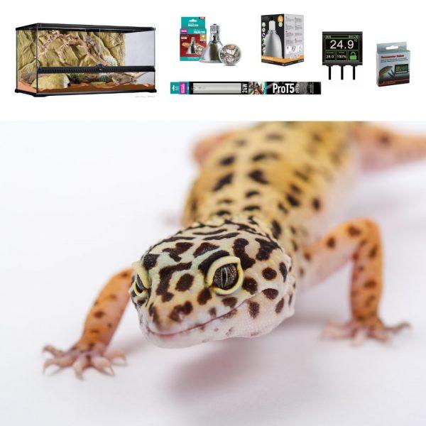 Leopard Gecko premium Terrarium 90cm (1)