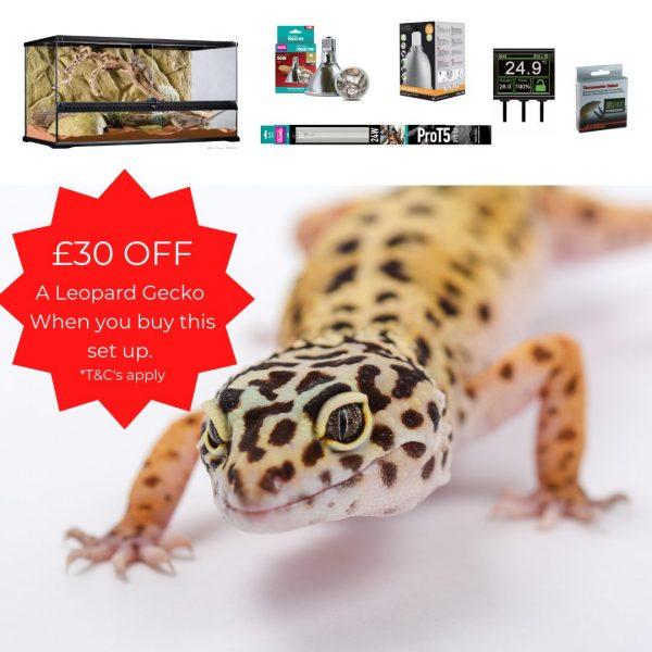 Leopard Gecko premium Terrarium 90cm – Special