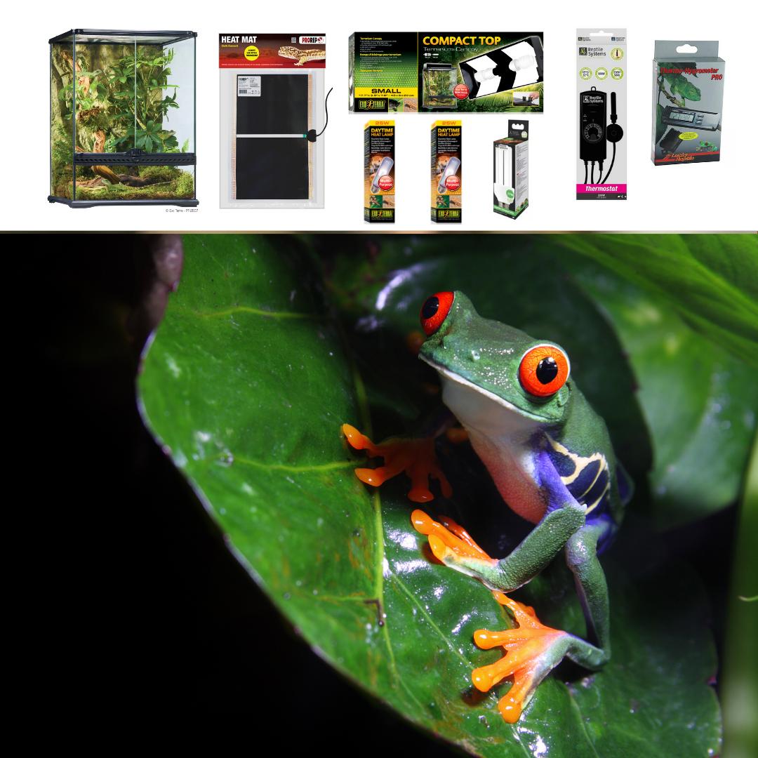 Red Eyed Tree Frog Terrarium Set Up Medium Evolution Reptiles