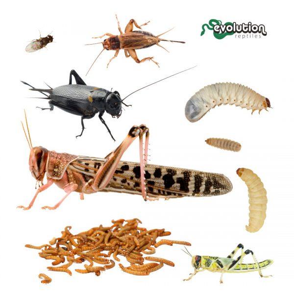 Live Reptile Food