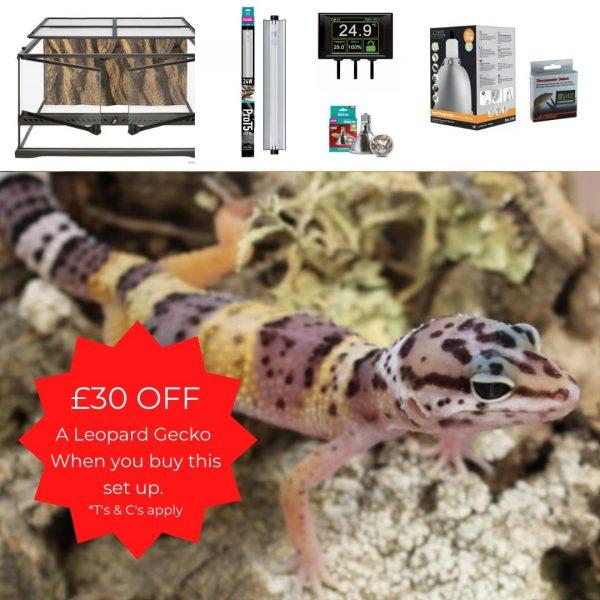 Leopard Gecko Terrarium 60cm + Special