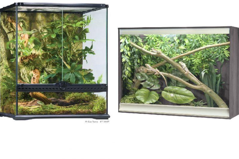 an image of terrarium vs vivarium